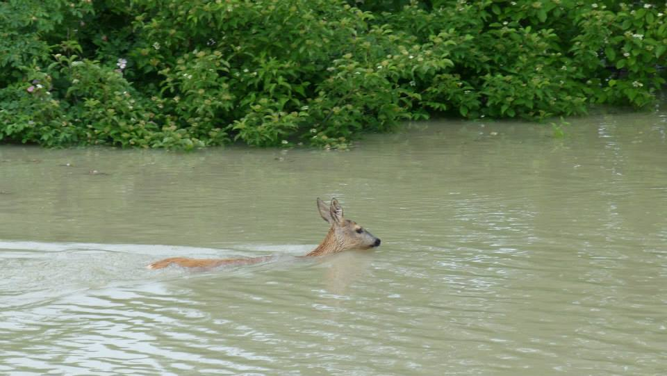 Povodne Bunkre.25